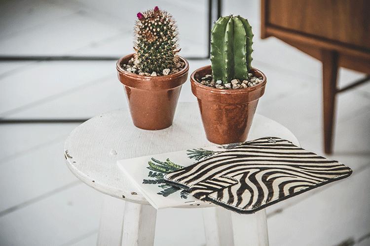 Katwalk Bloemenweelde Cactus
