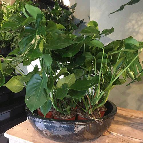 plant bloemenweelde amsterdam