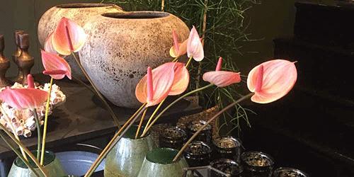 potten bloemenweelde amsterdam