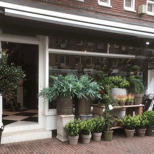 planten buiten bloemenweelde amsterdam