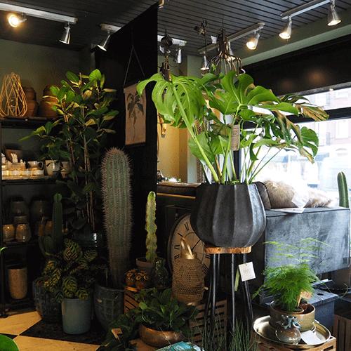 plantenwinkel bloemenweelde amsterdam