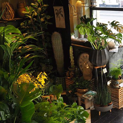 planten winkel bloemenweelde amsterdam