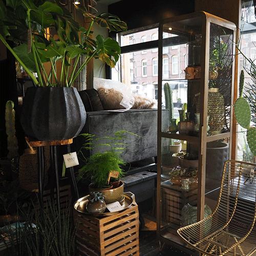 planten winkel bloemenweelde