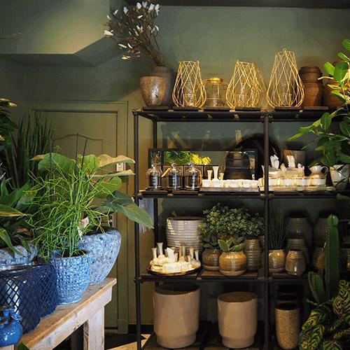 potten en planten bloemenweelde