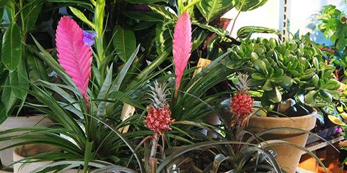 potten planten bloemenweelde