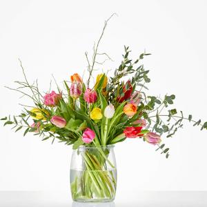 tulpenboeket Bloeiende tulp