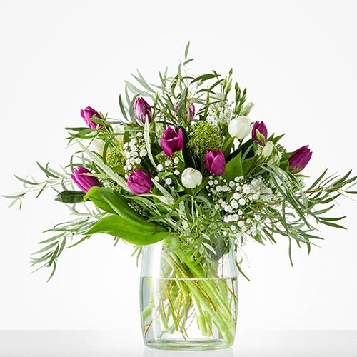 Wintertulpen, boeket met paarse tulpen en gipskruid
